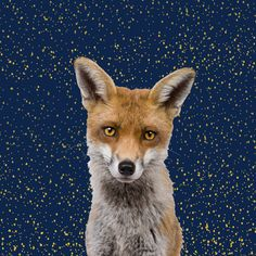 Fox (Paneelstof sweater)