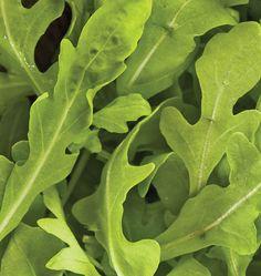 How to grow aruglua (West Coast Seeds)