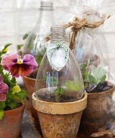 "no green thumb? use ""cut to size"" plastic bottles to cover your tender seedlings either directly in the garden, or in a pot, or on your sill. if you don't have a green thumb this is a great little greenhouse that works very well. Dream Garden, Garden Art, Garden Plants, Indoor Garden, Planter Garden, Herb Garden, Planter Pots, Garden Cloche, Indoor Plants"