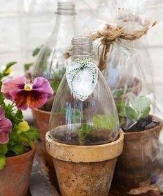 Astuces pour protéger boutures et semis ! Bouteille avec capuchon qui peut être retiré par la suite.´´´