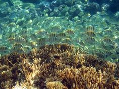 Occupying less than one-tenth of 1 percent of the ocean's sea floor, coral reefs are estimated to be home to nearly a quarter of all marine species. #Happonomy