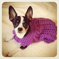 Angel Wing Pinafore inspired Chihuahua sweater