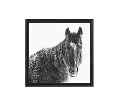 "Snowy Black Horse by Jennifer Meyers, 25 x 25"", Ridged Distressed, Black, No Mat"