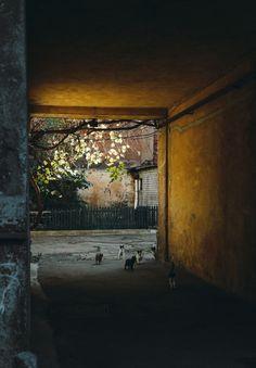 """""""Kitty-kitty-kitty... ks-ks-ks..."""" Odessa courtyard"""