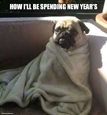 Funny pictures about Just Like This Pug. Oh, and cool pics about Just Like This Pug. Also, Just Like This Pug photos. Funny New Years Memes, New Year Jokes, Funny Memes, Hilarious, Funny Dogs, Funny Animals, Cute Animals, Funny Puppies, Pug Puppies