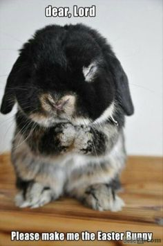 Dear lord, please make me the easter bunny <3 • too cuteeeeee :')