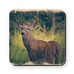 Handsome Buck Coasters