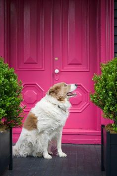 vintage Haustür in greller rosa Farbe