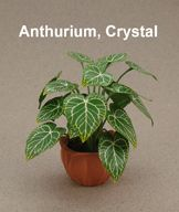 Anthurium Crystal - leaf sheets for a number of plants.  Good Resource.