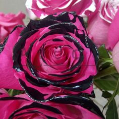 Τριαντάφυλλα Rose, Flowers, Plants, Pink, Plant, Roses, Royal Icing Flowers, Flower, Florals