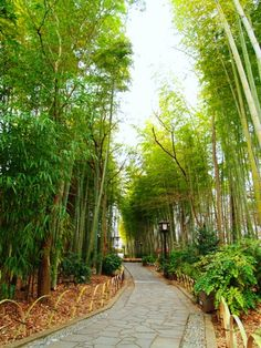 Syuzenji, Japan 竹林の小径