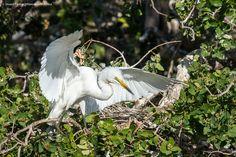 Xugana Island Lodge Heronry Safari, Island, Bird, Photos, Animals, Pictures, Animales, Animaux, Birds