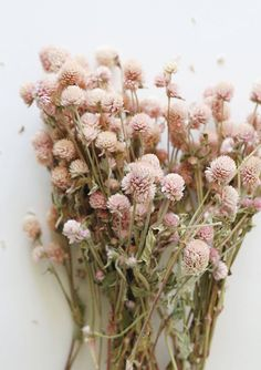 """Find beautiful dried wedding flowers for your DIY wildflower bridal bouquets at Afloral.com. Add these pretty soft pink globe amaranth natural flowers. Due to the nature of this product, color and size will vary. Light Pink 14-18"""" Tall, .5-1"""" Blooms Air Dried Grown and Harvested in the USA These stems are naturally beautiful, each one is unique. Note that each is sold per stem. Wildflower Bridal Bouquets, Dried Flower Bouquet, Dried Flowers, Wedding Bouquets, Wedding Flowers, Light Pink Flowers, Flower Bouquets, Flower Lights, Deco Floral"""