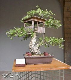 Bonsai tree house (but this doesn't link back to the original) Bonsai Tree Types, Bonsai Plants, Bonsai Garden, Bonsai Trees, Miniature Trees, Miniature Fairy Gardens, Ikebana, Bonsai Tree Tattoos, Tattoo Tree