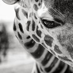 Beautiful collection of black & white animal portraits