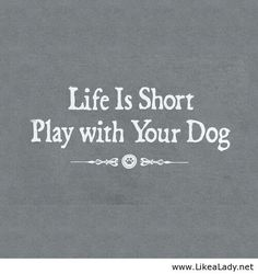 ...Play with your Dog!