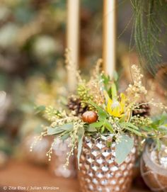 Zita Elze foliage and hazelnut filled candle display for Christmas and Advent Julian Winslow ᘡℓvᘠ□☆□ ❉ღϠ□☆□ ₡ღ✻↞❁✦彡●⊱❊⊰✦❁ ڿڰۣ❁ ℓα-ℓα-ℓα вσηηє νιє ♡༺✿༻♡·✳︎· ❀‿ ❀ ·✳︎· FR DEC 23, 2016 ✨ gυяυ ✤ॐ ✧⚜✧ ❦♥⭐♢∘❃♦♡❊ нανє α ηι¢є ∂αу ❊ღ༺✿༻✨♥♫ ~*~ ♪♕✫❁✦⊱❊⊰●彡✦❁↠ ஜℓvஜ