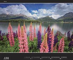 Edizioni A. Milani, Vineyard, Mountains, Nature, Travel, Outdoor, Photos, Fotografia, Calendar