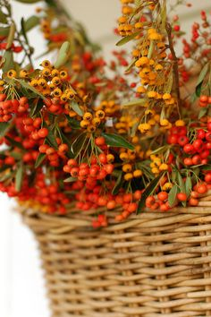 Basket of autumn berries Autumn Day, Autumn Home, Autumn Leaves, Autumn Flowers, Harvest Time, Fall Harvest, Autumn Decorating, Mabon, Happy Fall Y'all