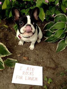 Bless her heart! (southern translation: dumbass dog, fuckin' eatin' rocks, gonna be shittin 'em all up on my carpet...)