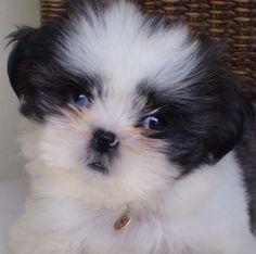 Uma linda bebê de olhos azuis!