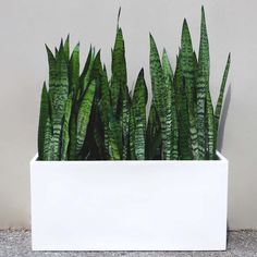 Belmont Rectangle Modern Planter Box White. Made by rootandstock