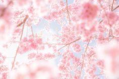 Pretty Flowers, Pretty Pastel, Fb Cover Photos, Nature View, Peach Blossoms, Spring Blossom, Fantasy Landscape, Spring Day, Disney Wallpaper