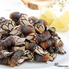 I've actually ate these things.   Have you already tasted goose barnacles? Portugal is an amazing country to eat it! Já provou perceves? Portugal é um excelente país para comer esta iguaria!