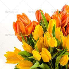 Realistic Graphic DOWNLOAD (.ai, .psd) :: http://jquery.re/pinterest-itmid-1006896465i.html ... Bunch of spring tulips flowers colorful ...  Liliaceae, Tulipa, bouquet, bunch, colorful, copy-space, flora, flower, fresh, freshness, isolated, nature, no people, nobody, object, orange, plant, spring, tulip, white background, yellow  ... Realistic Photo Graphic Print Obejct Business Web Elements Illustration Design Templates ... DOWNLOAD :: http://jquery.re/pinterest-itmid-1006896465i.html