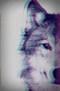 dog photography swag art trippy cute wolf eyes husky Cool beautiful photo perfect hipster Grunge animal blue purple amazing bad Alternative ...