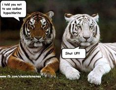 funny animals, funny animal pictures, funny pictures of animals Funny Animal Quotes, Animal Jokes, Funny Animal Pictures, Cute Funny Animals, Funny Cute, Funny Photos, Animal Captions, Tiger Pictures, Quote Pictures