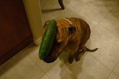 """food on my dog"""