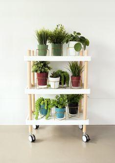 Present Time Coy Bloempot Zwart Small Harmful Plants, Home Cocktail Bar, Crochet Cushion Cover, Spider Plants, Planted Aquarium, Aquaponics, Bars For Home, Geraniums, Trellis
