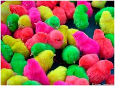 Easter no-no: Dyeing animals leads to dying animals