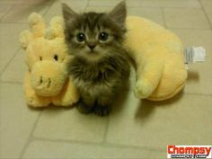 OK this little kitty cat is just too cute