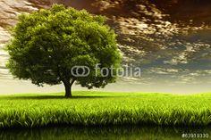 Photo: Spring landscape