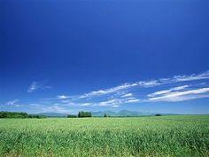 GREEN GARDENS: Blue Sky over Prairiehttp://99greengardens.blogspot.com/