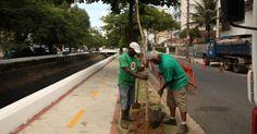Mais de 50 árvores são plantadas na Avenida Almirante Cochrane