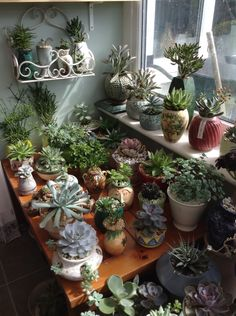 The succulent table !