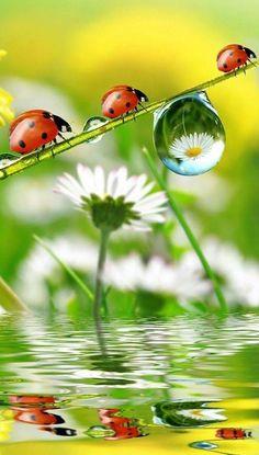 - Marienkäfer - Welcome Haar Design Beautiful Creatures, Animals Beautiful, Cute Animals, Animal Pictures, Cute Pictures, Beautiful Pictures, Beautiful Bugs, Beautiful Flowers, Tier Fotos