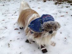 So You Think Dogs Don't Need Boots? I Say You're Wrong | Dogster
