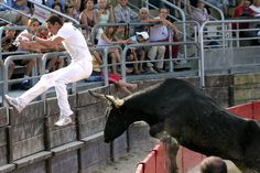 In France's Camargue, Bulls Are A Passion And A Way Of Life : NPR
