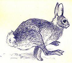 pen drawn hare