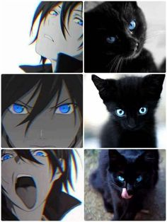 Image result for noragami memes
