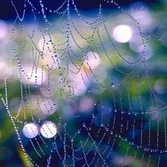 Spider's web In the rain