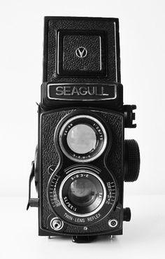Seagull Camera