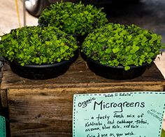 Food Highlight: Microgreens. #microgreens #eatyourveggies #foodhighlight #BocaRaton #bariatricsurgery