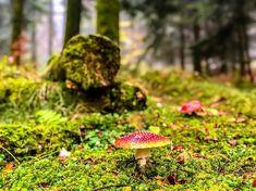 . .  . . . #worldnaut #champignons #cueillette # #sauvage #vaud #lausanne #foret #forest #lac #leman #lacleman #lemanlake #lazyafternoon #relax #dolcevita #clouds #nuages #soleil #sun #relax #landscapephotography #paysage #photooftheday #picoftheday #suisse #schweiz #svizzera #switzerland #swisslife . . . Suivez mes autres comptes Instagram: @gourmetsauvage.ch @fungi_of_switzerland . . . Lausanne, Le Mans, Switzerland, Landscape Photography, Relax, Clouds, Sun, Instagram, Cloud