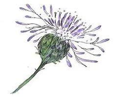 Watercolor Flowers, Watercolor Paintings, Watercolours, Scottish Flowers, Scottish Thistle, Scotland National Flower, Thistle Tattoo, Flower Art Drawing, Watercolor Beginner