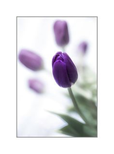 Spring Art   Spring Flower Photography  by CrionnaPhotography, $35.00